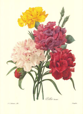 Vintage Print by Redoute ~ 10 by 13 inches ~ Colorful Bouquet #89