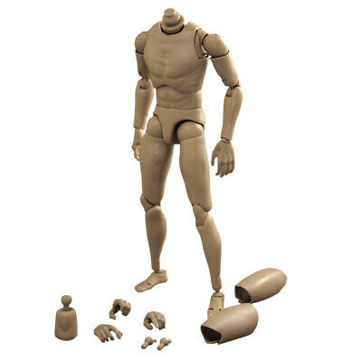 1/6 Scale Narrow Shoulder Male Action Figure Body Muscles for TTM18 TTM19