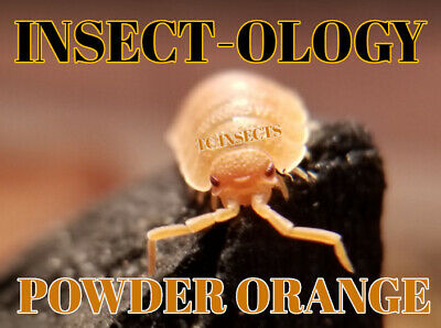 🏆 LIVE POWDER ORANGE ISOPODS Bioactive Cleaner frog terrarium Dubia Crickets