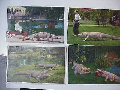 Antique Vintage Lot Of 12 Alligator Postcards Florida And California Used And Un