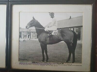 Old Race horses Photos from 1975 Epson Derby cup winner, Cheltenham Gold cup etc