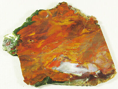 PURPLE COW AGATE...Fiery abstract pattern in many different colors.