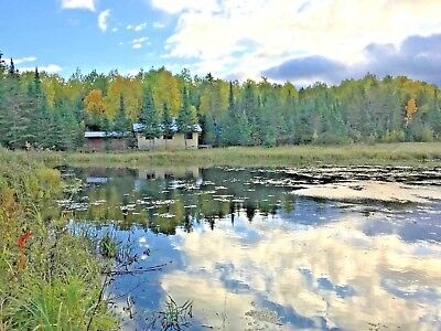 Wilderness Cabin, 178 acres, big trees, survivalist camp (NW Ontario, Canada)