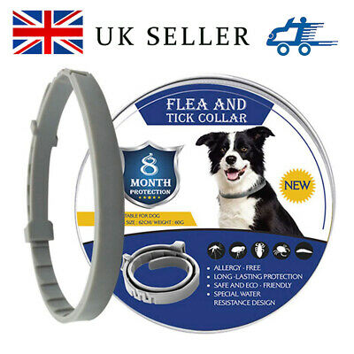 Flea and Tick Collar Control Protection Adjustable For Dogs Cat 8 Months 62cm-UK