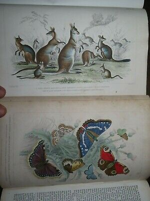 1866 A History Of Earth & Animated Nature By Goldsmith 2 Vols 29 Col Plts Birds