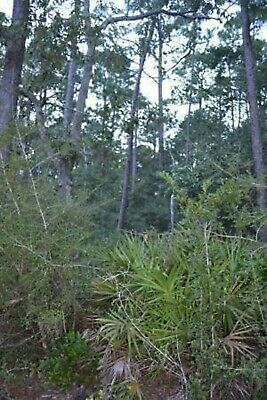 Mississippi land near beach owner finance only 99-DOWN-198-MONTH-OCEAN-SPRINGS