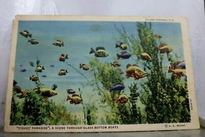Florida FL Glass Bottom Boats Silver Springs Postcard Old Vintage Card View Post