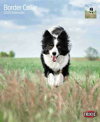 Trixie Kalender 2020 Border Collies Border Collie Hund Tierkalender