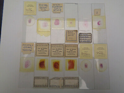 Set of 12 vintage prepared microscope slides LOTM7P27W