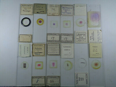 Set of 12 vintage prepared mammalian microscope slides LOTMCR2F99V