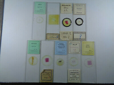 Set of 9 vintage prepared botanical microscope slides LOTMTCCH9