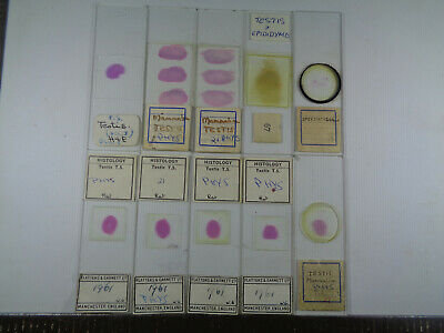 Set of 10 vintage prepared mammalian microscope slides LOTM7TEEQ