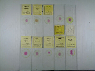 Set of 10 vintage T.Gerrard prepared mammalian microscope slides LOTMTGG3H