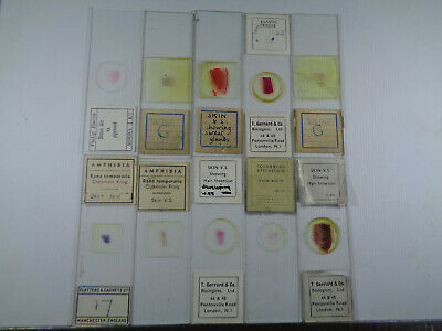 Set of 10 vintage prepared mammalian & amphibian microscope slides LOTMS99FQ