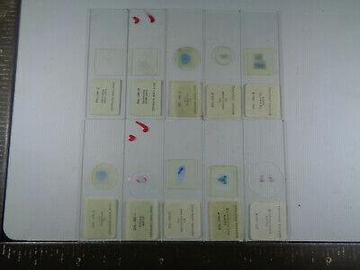 Set of 10 vintage Gerrard prepared botanical microscope slides LOTMSS7EJ1