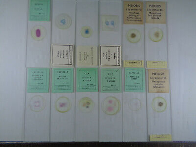 Set of 12 vintage T.Gerrard prepared botanical microscope slides LOTM9FY3