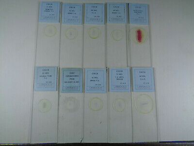 Set of 10 vintage T.Gerrard prepared bird microscope slides LOTMT644