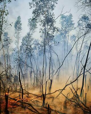 Digital Picture Image Photo JPG (Wildfire)