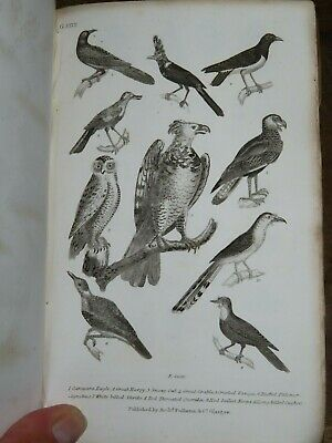 1838 History Of The Earth & Animated Nature By Goldsmith 3 Vols 39 Plts Birds *