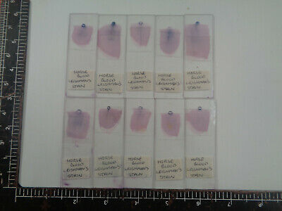 Set of 10 vintage prepared mammalian microscope slides AO3BLNR