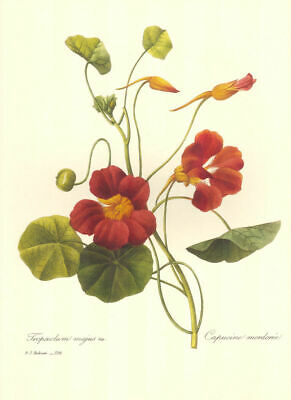 """Group of 4 Redoute Vintage Botanical Prints (10"""" x 13"""") Lot 4170~Free Shipping!"""