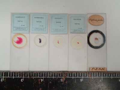 Set of 5 vintage prepared fish microscope slides AO3THH31