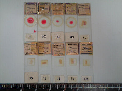 Set of 10 vintage prepared bird microscope slides AO3NT3H