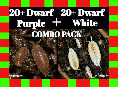 Live ISOPOD COMBO PACK: 20+ Dwarf White and 20+ Dwarf Purple, terrarium isopods