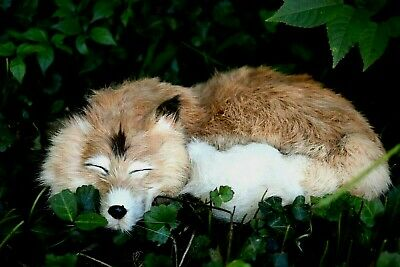 Real Fur SLEEPING CHRISTMAS FOX Pup Curled Up on Florest Floor Hand-Crafted NICE