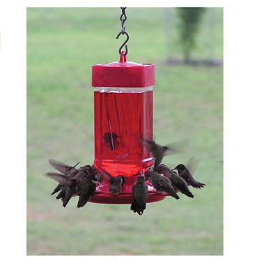 First Nature 16oz Red Hummingbird Feeder #3051 10 Ports w// Red Trap-It Ant Moat
