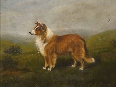 Early 20th century English Rough Collie Dog Portrait Antique Oil Painting