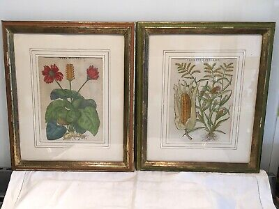 Pair Of Antique Hand Coloured Engravings In Italian Florentine Painted Frames