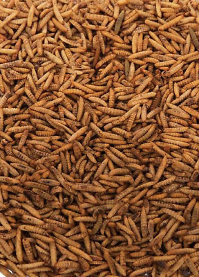 MALTBYS' STORES 1904 LTD 10kg DRIED CALCIWORMS (HIGHER CALCIUM THAN MEALWORMS )