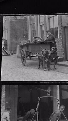 1920s Negative Photo X2 Brittany ? Dog Pulling Cart And Men Working