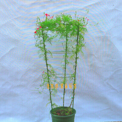 Climbing Plant Support Cage Garden Trellis Flowers Tomato Stand With 3 Ring Tool