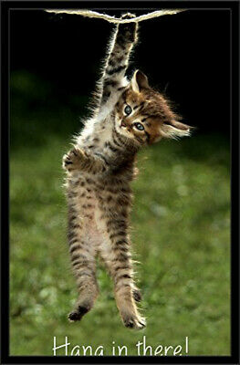 Trends International Kitten Hang In There Wall Poster 22.375' X 34'