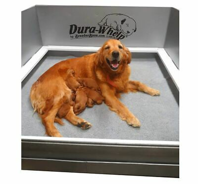 """DuraWhelp Whelping Box Large 48""""x48""""x20"""" With Floor and Rails"""