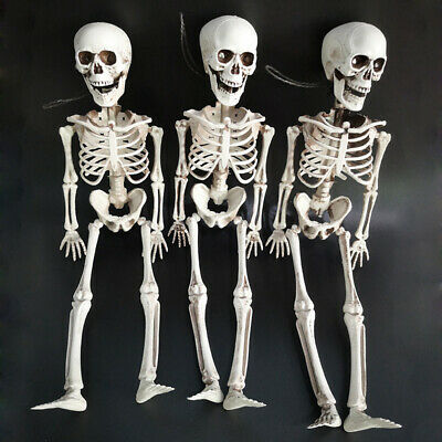Halloween Jointed Skeleton 6 ft Life Size Party Haunted House Decoration Props