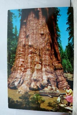 California CA Sequoia National Park General Sherman Tree Postcard Old Vintage PC