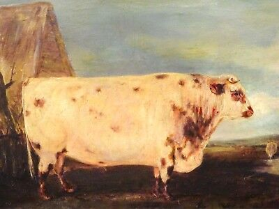 Fine 19th Century French Charolais Prize Bull Cow Farm Portrait Signed
