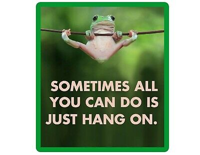 Funny Frog Hang In There  Refrigerator / Locker  Magnet Gift Card Insert