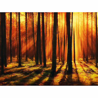 Forest Sunset Nature Photograph Wall Art Canvas Print 18X24 In