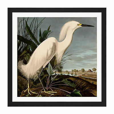 Audubon Birds Snowy Heron Painting Square Framed Wall Art 16X16 In