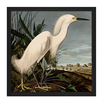 Audubon Birds Snowy Heron Painting Square Framed Mountless Wall Art 16X16 In