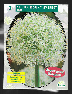 3 bulbes d'Allium Mont Everest