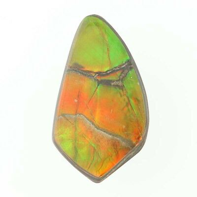 10.93ct Ammolite Doublet Gemstone - Free-form Cabochon Cut Loose Solitaire