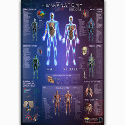 249876 Human Anatomy Interactive Health Body Skull Medical WALL PRINT POSTER AU