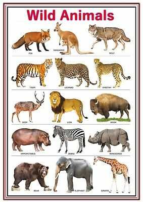 A4 Poster Sign Educational Children Nursery Childminder Wild Animals