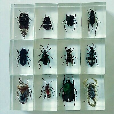 Lot of 12 LUCITE / PLASTIC Resin Entomology Taxidermy Bugs Insects vintage?