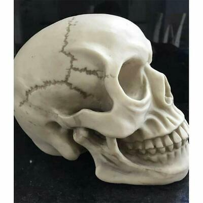 Resin Replica 1:1 Real Life Human Anatomy Skull Skeleton Medical Halloween Party